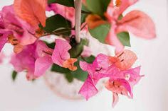 bougainvillea - Google Search Cute Wallpaper Backgrounds, Cute Wallpapers, Agave Plant, Foliage Plants, Bougainvillea, Container Plants, Plant Care, Houseplants, Indoor Plants