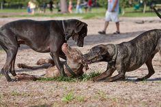 """Hundewiese: Ort der Traumatisierung wenn Halter nicht eingreifen oder getreu dem Motto: """"Die machen sich das schon aus"""" leben."""
