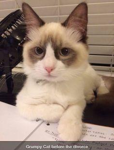 Grumpy cat before the divorce.