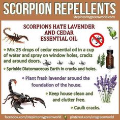 Young Living Essential Oils: Scorpion Repellents this is for you! Cedar Essential Oil, Doterra Essential Oils, Young Living Oils, Young Living Essential Oils, Cedar Oil, Insecticide, Mosquitos, Oil Mix, Insect Repellent