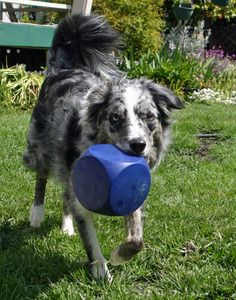 A variety of toys and games are on the market that are tailor-made for blind dogs.
