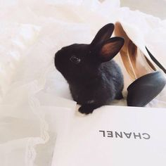 Imagem de bunny, chanel, and fashion