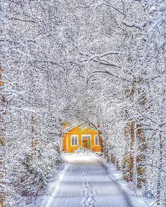 It's a beautiful world I Love Winter, Winter Colors, Long Winter, Foto Top, Winter Magic, Winter Scenery, Snowy Day, Snow Scenes, Winter Beauty