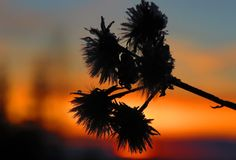 Dandelion, Nature Photography, My Photos, Flowers, Plants, Dandelions, Nature Pictures, Plant, Taraxacum Officinale