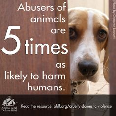Pets N More: Understanding The Connection Between Animal Abuse and Family Violence