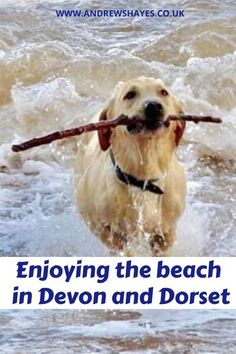 Andrewshayes lists the Top Best East Devon Dog Pet Friendly BEACHES. Plenty of beaches for you and your pet to enjoy on Holiday in East Devon. Devon Beach, Monmouth Beach, Devon Coast, Dog Friendly Holidays, Uk Beaches, Lyme Regis, Pet Dogs, Pets, Dog Walking