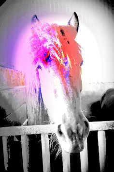 You have to let go  and let the feelings go.  The more insecure,  And clumsy you are  and less control you have,  the better is the horse.