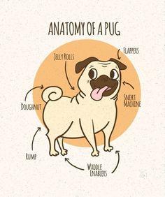 Anatomy of a Pug.