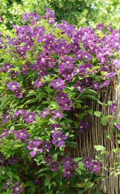Kleine Gärten harmonisch gestalten