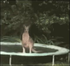 Funny animal gifs - part 220 (10 gifs)