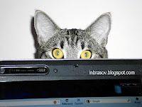 Felix Cats, Animals, Gatos, Animales, Animaux, Animal, Cat, Animais, Kitty