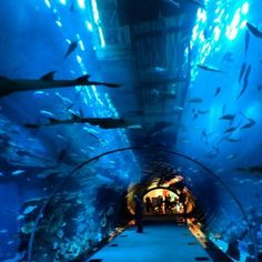 aquarium in Dubai Mall by Ikner B Dubai Aquarium, Dubai Vacation, Places To Travel, Places To Visit, Dubai Mall, Top Place, Modern City, United Arab Emirates, Abu Dhabi