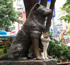 Posed with Hachiko