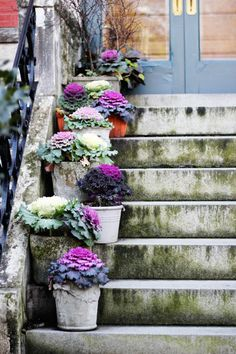 potted cabbage lined stairs//love taza
