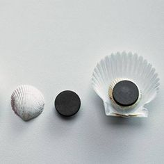 Turn a shell upside down. Glue a smaller shell, right side up, onto it. Glue a magnet to smaller shell. Let glue harden before using magnet.