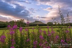 Roseberry Topping, Through The Flowers