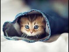Petits chats mignons et jolis comme tout ! - YouTube