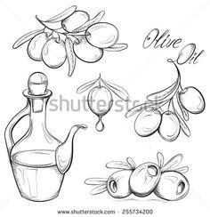 Olivovník Kresba Fotografie, snímky a obrázky | Shutterstock