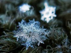 Stunning and amazing Close-Up Pictures of Snowflakes   #Beauty Of Nature  These are The Snow Flakes on Grass Fibers.. During the Polar Vertex period, They appear.. On Such Microscopic Level The Nature has made them so Beautiful.   For more travel Updates/Offers and Interesting Stuffs be connected to  Travel Universally