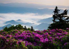 18Hx27W Photograph Print of Roan Mountain by robtravisphotography, $175.00