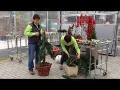 Scherngell Gärtnereitipp: Adventschmuck für den Eingangsbereich - YouTube