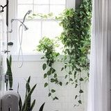 Plants are well known as great way to add some color, texture and life to a space, and when they also happen to be beautifully oversized hanging plants, they also bring the drama