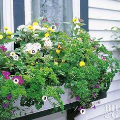 ccdb3bdc1240d Butterfly Window Box Globe Amaranth, Butterfly Species, Garden Spaces,  Garden Plants, Garden