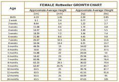 Cane Corso growth chart Pets Cane corso mastiff, Cane