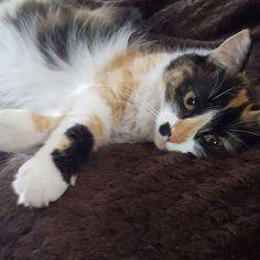 Y con esa carita como decir que no... #animallover #adorable #amigo #bestfriends #gatitolindo #mundogatuno #instamoments #instapic #ilovemycat #kitty #lovecats #cat #catsoninstagram #cats_of_instagram #catoftheday #catstagram #kitty #lovecats