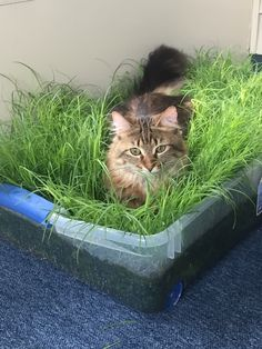 Indoor grass box