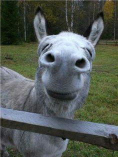 The Donkey That Outsang Domingo How Pollyanne Was Saved From The - 29 adorable animals that will put a smile on your face