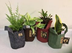 12 DESIGNER ROOT POUCH ONE GALLON GROW BAGS! 4 COLORS! 3 OF EACH! SUPER CUTE! #RootPouch