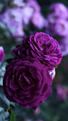 Best Photo Purple Flowers wallpaper Suggestions Purple flowers are generally regal flowers. They can be deluxe and expensive, chic along with boheme.