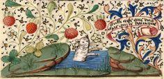 El baño del gato - bathing cat. Ilustra un proverbio medieval francés 'aussi aise que ung chat qui ce baingne' = tan (in)cómodo como un gato que se baña. Libro de Horas. Rouen s. XV.  Paris, BnF, Nouvelle acquisition latine 3134, fol. 18v