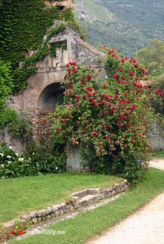 Ninfa is a deserted and overgrown ghost town, presumably founded by the Volscians, that is now an English style botanical garden. It was onc...