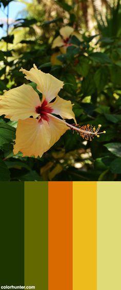 H25+Color+Scheme