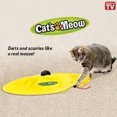 "Cat's Meow $26.98 Product # HC6347 - Every Cat I know loves this! Keeps your kitty entertained all day long! Just place on floor, press button and watch your cat try to keep up with the moving wand. It darts and scurries like a real mouse, randomly changing speeds and directions. Keeps cat occupied so he or she doesn't scratch and destroy furniture, carpets or curtains. Requires 3-C batteries (not included). 22-1/2""Diam"