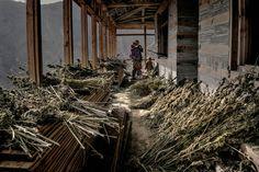 Himalayan Tribal Landrace Farmers.