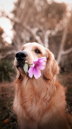 PawromaTherapy/Holistic Pet Information and Pet Health Products for Dogs and Cats - Natural pet information for dogs and cats. Articles, information, free holistic pet tips, natural - Cute Dogs And Puppies, Baby Dogs, Pet Dogs, Dog Cat, Doggies, Beagle Puppies, Puppy Husky, Mastiff Puppies, Samoyed Dogs
