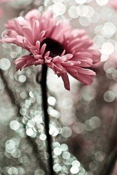 lovely-flower
