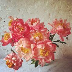 Design*Sponge's Favorite Florists on Instagram: instagram.com/ruby_marylennox