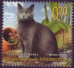 Serb Republic of Bosnia and Herzegovina: First Domestic Cat Stamps
