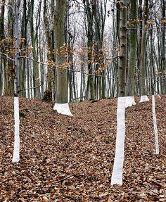 Zander Olsen - Tree Line: Jhutti (2004) http://trojnarski.tumblr.com/post/79481087340