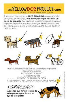 43 Ideas De Frases Mascotas Mascotas Perros Perros Frases