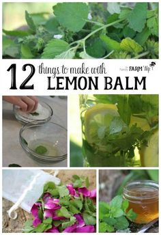 12 Things to Make With Lemon Balm - Lemon balm is an easy to grow herb that not only attracts bees to the garden, but is also a great anti-viral with relaxing properties that are helpful for soothing frayed nerves and calming hyper children. Traditionally, it's been used to gently treat colic and upset stomach in everyone from infants to elders. A leaf can be chewed to freshen the breath or crushed and placed on a bug bite to help ease the itch.