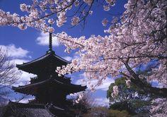 Kyoto Shinnyo do Temple #Japan