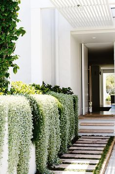 over flowing planting in planters | adamchristopherde... More