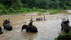 Traffic jam haha ;) Chiang Mai Elephant, Elephant Camp, Haha, Camping, Animals, Campsite, Animales, Animaux, Ha Ha