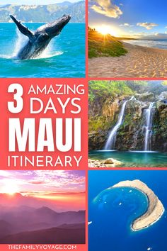 Maui is a great place to spend a few days to get a taste of what Hawaii has to offer. With just 5 hours flight time, Hawaii is now an option even for long weekends. Even in a short time you can experience Hawaiian wildlife and get adventurous in Maui's diverse landscapes. In this article you'll find everything you need to start planning your trip to Maui. Trip To Maui, Hawaii Vacation, Honolulu Hawaii, Kauai, Great Places, Places To Go, Hawaii Travel Guide, 5 Hours, Big Island