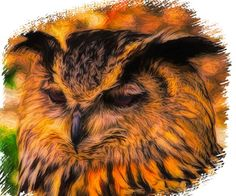 Modern Graphic Design, Graphic Design Illustration, Free Pictures, Free Images, Owl Bird, Photo Art, Wildlife, Hedwig, Nature